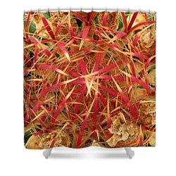 Barrel Cactus Shower Curtain by Laurel Powell