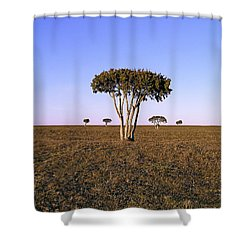 Barren Tree Shower Curtain