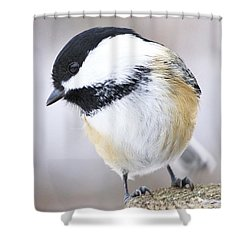 Shower Curtain featuring the photograph Bashful by Heather King