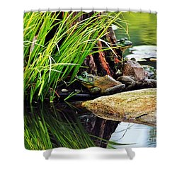 Basking Bullfrogs Shower Curtain by Angela Murray