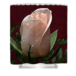 Shower Curtain featuring the photograph Basking by Doug Norkum