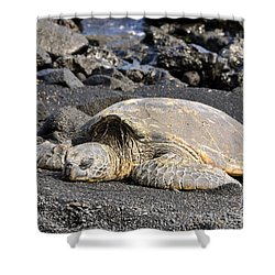 Shower Curtain featuring the photograph Basking In The Sun by David Lawson