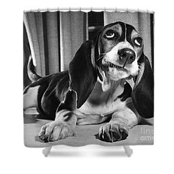 Basset Hound Puppy Shower Curtain by ME Browning
