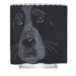 Basset Hound Shower Curtain