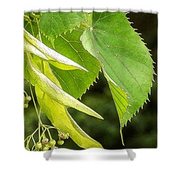 Basswood Berries Shower Curtain by Bill Kesler