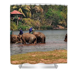 Bath Time Shower Curtain by Vivian Christopher
