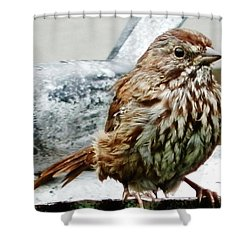 Shower Curtain featuring the photograph Bathe Then Fluff by VLee Watson