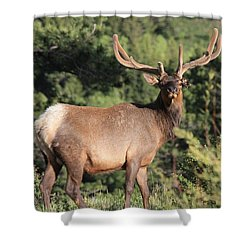 Battle Scars Shower Curtain