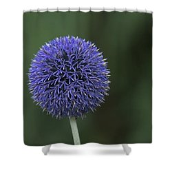 Bavarian Globe Thistle Shower Curtain by Sean Allen