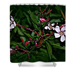 Bay Beauty Shower Curtain
