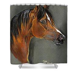 Bay Horse Portrait Shower Curtain by Angel  Tarantella