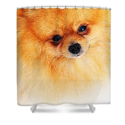 Be My Valentine Shower Curtain by Jenny Rainbow