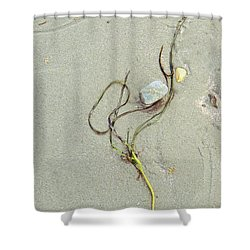 Beach Arrangement 5 Shower Curtain