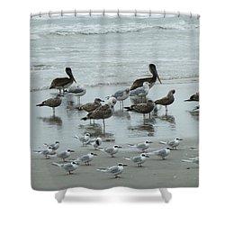 Beach Birds Shower Curtain