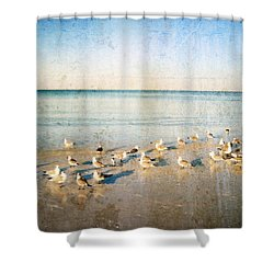 Beach Combers - Seagull Art By Sharon Cummings Shower Curtain