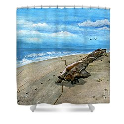 Shower Curtain featuring the painting Beach Drift Wood by Melly Terpening