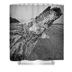 Beach Driftwood View Shower Curtain