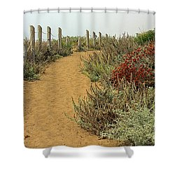 Shower Curtain featuring the photograph Beach Dune  by Kate Brown