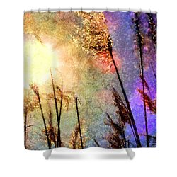 Beach Grass Afternoon Shower Curtain by Janine Riley