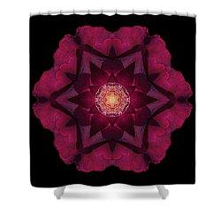 Beach Rose I Flower Mandala Shower Curtain by David J Bookbinder