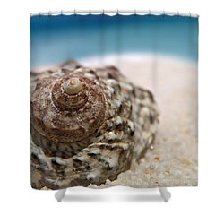Shower Curtain featuring the photograph Beach Treasure by Micki Findlay