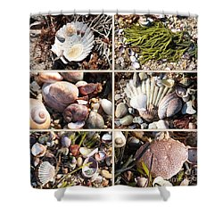 Beach Treasures Shower Curtain by Carol Groenen