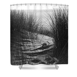 Beachgrass Shower Curtain by Adria Trail