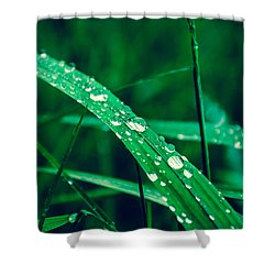 Beading Up Shower Curtain