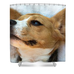 Beagles Dreams Shower Curtain
