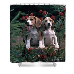 Beagles Shower Curtain by Hans Reinhard