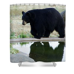Bear 2 Shower Curtain