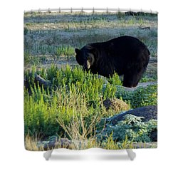 Bear 3 Shower Curtain