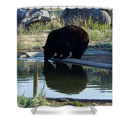Bear 4 Shower Curtain
