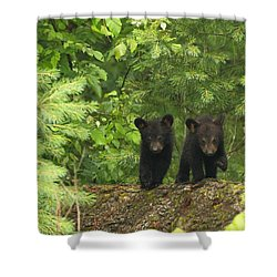 Shower Curtain featuring the photograph Bear Buddies by Coby Cooper