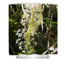 Bear Grass No 3 Shower Curtain by Belinda Greb