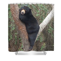 Bear In Tree   Shower Curtain