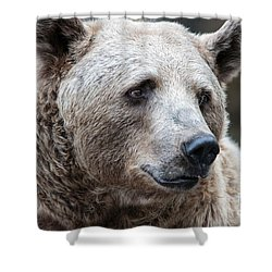 Bear Necessities Shower Curtain by Ray Warren