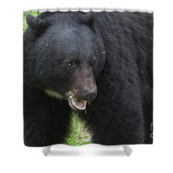 Shower Curtain featuring the photograph Bear by Rod Wiens
