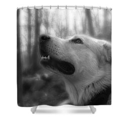 Bear Tooth Not Camera Shy Shower Curtain