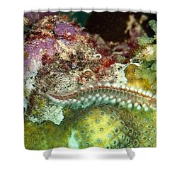 Shower Curtain featuring the photograph Bearded Fireworm On Rainbow Coral by Amy McDaniel