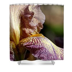 Bearded Iris #1 Shower Curtain