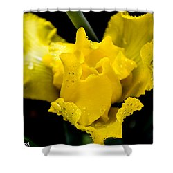Bearded Iris Morning Dew Shower Curtain by Mary Ward