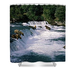 Bears Fish Brooks Fall Katmai Ak Shower Curtain
