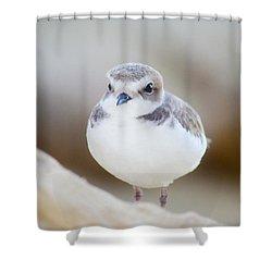 Beautiful Bird Shower Curtain