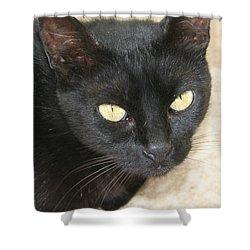 Beautiful Black Cat Portrait  Shower Curtain by Tracey Harrington-Simpson