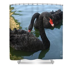 Beautiful Black Swans Shower Curtain by Carla Carson
