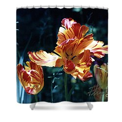 Shower Curtain featuring the photograph Gorgeous Tulip by Phyllis Kaltenbach