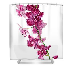 Beautiful Burgundy Orchid Flower Original Floral Painting Pink Orchid I By Megan Duncanson Madart Shower Curtain by Megan Duncanson