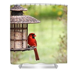 Shower Curtain featuring the photograph Beautiful Cardinal by Trina  Ansel