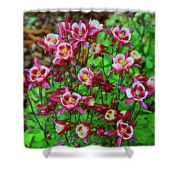 Beautiful Columbine   Shower Curtain by Ed  Riche